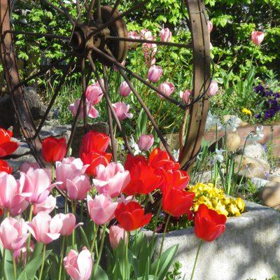 Profiterez de notre jardin ombragé
